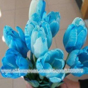 Semi viola ortensia Semi balcone Bonsai Fort Viburnum Hydrangea macrophylla fiore pianta bonsai 100