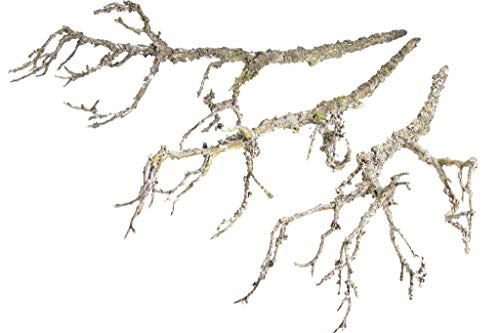 DPI künstlicher Deko-Zweig mit ca. 40 cm Länge (3 Stück) (Natur)