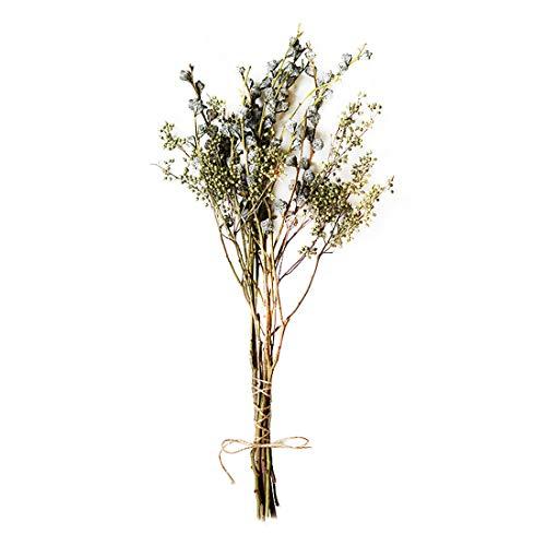 AUTOP Eukalyptus getrocknete Blumen Heu Ginkgo Drachenklaue Dekoration Shooting Requisiten DIY Blumenarrangement Natürliche getrocknete Blume Hirse Grün 30-60 cm