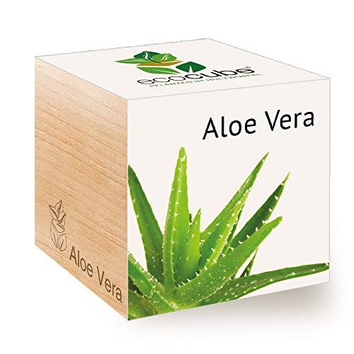Feel Green Ecocube Aloe Vera, Nachhaltige Geschenkidee (100% Eco Friendly), Grow Your Own/Anzuchtset, Pflanzen Im Holzwürfel, Made in Austria - Aloe-vera-pflanze