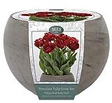 Grow-Set für die Anzucht von Tulipani in Rot Typ
