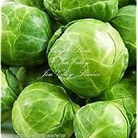 PlenTree Coles de Bruselas Long Island semillas mejoradas NO OGM excelente calidad comestible