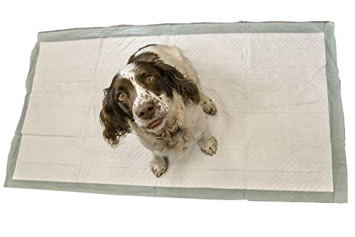 20 Extra Groß 150 x 80 cm Puppy Pet WC Training Wee Pads ohne Duft ASIN