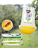 Generic Param Fruit Fly Trap - O (for Orchard Crops) - 5 Trap