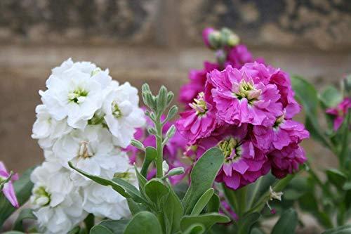 . Blumensamen: Aktien Blumen Rare Mix Samen für Gemüsegarten-Garten Samen für den Balkon (19 Packets) Gartenpflanzensamen