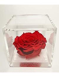 premium-rose.com Rossa Cubo Rosa Stabilizzata Maxi Rossa 10x10x10 Passionefiori.it Il Cubo 10 Rosso con Una Vera e Propria Rosa Che Dura 5 Anni
