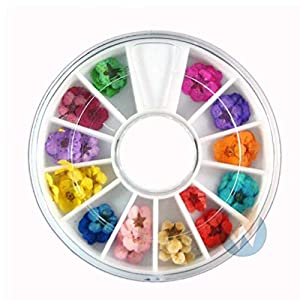AYRSJCL Nail Art Zubehör reale trockene getrocknete Blumen 12 Farben Bundle...