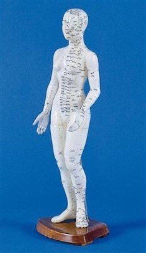 Akupunkturfigur weiblich, Akupunktur Figur, TCM, 48 cm
