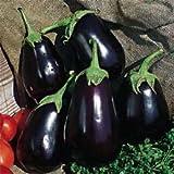 Premier Seeds Direct ORG012 - Semillas para verduras (berenjena)