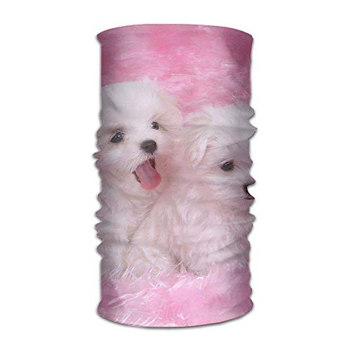 bvncfghjdfgj Headwear Cute Puppy Pet Headband Sweatband Face Mask Scarf Bandana Neck Gaiter Wrap Liner -