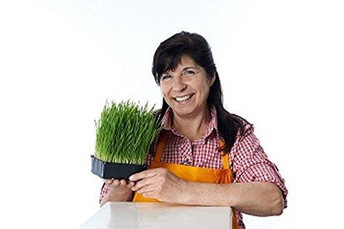 Allgäuer Bio Weizengras