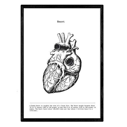 Nacnic Corazon Plakat. Anatomie des menschlichen Körpers. Muskeln und Knochen. Filme mit menschlichen Körperteilen. A3 Größe