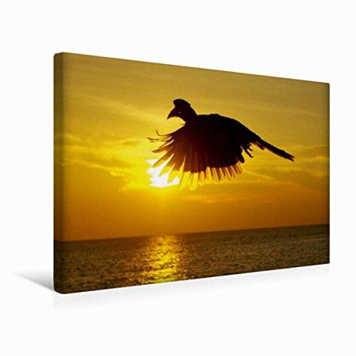 Premium Textil-Leinwand 45 cm x 30 cm quer Silhouette | Wandbild, Bild auf Keilrahmen, Fertigbild auf echter Leinwand, Leinwanddruck: Nashornvogel im Gegenlicht (CALVENDO Natur) (Wild-tier-silhouette)