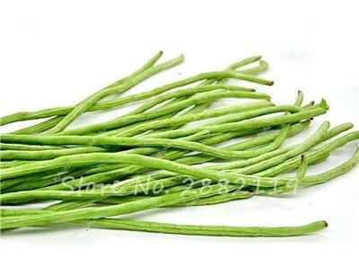 10 Pcs Multi Color long haricots Graines santé Graines de légumes biologiques, la croissance naturelle pour jardin délicieux Bon savoureux 14