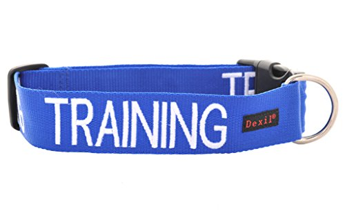 TRAINING-Dog-In-TrainingDo-Not-Disturb-Blue-Colour-Coded-S-M-L-XL-Dog-Collars-PREVENTS-Accidents-By-Warning-Others-Of-Your-Dog-In-Advance-S-M