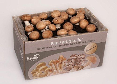Hawlik Pilzbrut GmbH