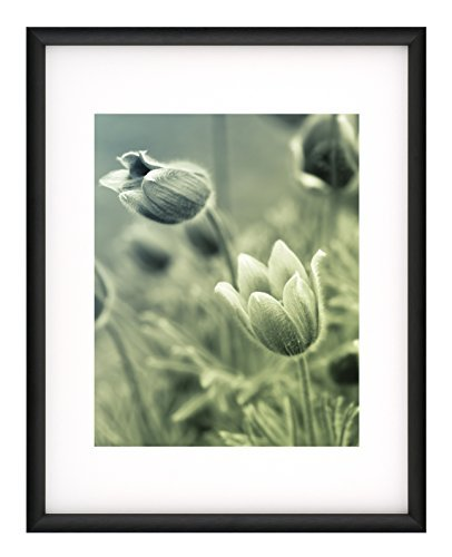 Nielsen Bainbridge Satin Cosmopolitan Frame, 8 x 10/11 x 14, Black by Nielsen Bainbridge