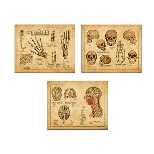 Hudson Frames Vintage Anatomische medizinische Prints - Antike Anatomie Illustrationen - Galerie Wanddeko, Kunstdruck, Kunstdruck 8 x 10 cm, ungerahmt (Set von 3 Stück) (Frames Medizinische)