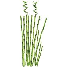 Suchergebnis auf f r bambus deko - Bambusstangen deko ...