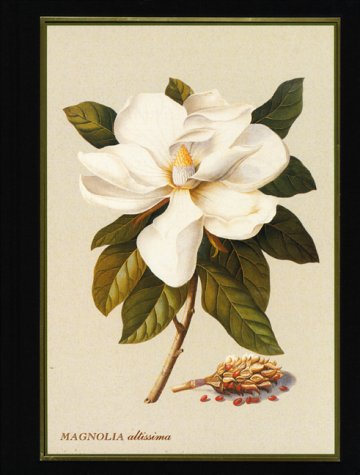 Magnolia: Botanical/Blank Book -