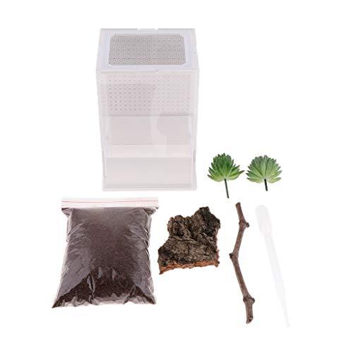 KESOTO Acryl Terrarium Fütterungsbox Transportsbox für Reptilien Schildkröte Eidechse Frosch Grille Gottesanbeterin - Typ 2