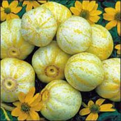 Bobby-Seeds Gurken Samen Lemon Freilandgurke Portion