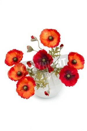 """Alu-Dibond-Bild 70 x 110 cm: """"The image of a bouquet of artificial poppies in a vase, isolated, on a white background."""", Bild auf Alu-Dibond"""