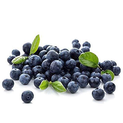 Portal Cool Kaufen, 3 2 Free Blueberry Baumsamen 100 Stück Heidelbeere
