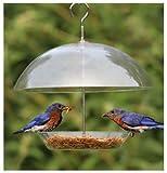 Klar Dome Vogelfutterspender für kleine Vögel–vollständig Verstellbarer bedeckt, so Sie können wählen, welche Größe Vogel Sie ernähren wollen.
