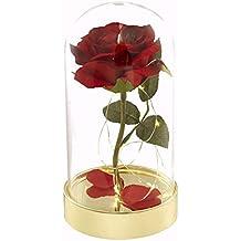 Amazon Fr Rose Eternelle