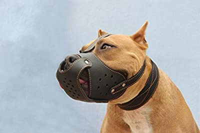 Dog Muzzle Pit Bull AmStaff Basket Genuine Leather Staffordshire Terrier from CollarDirect