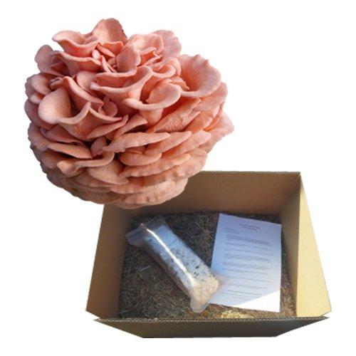 Rosenseitling Pilzbeet-Gartenset, Pilze selber züchten
