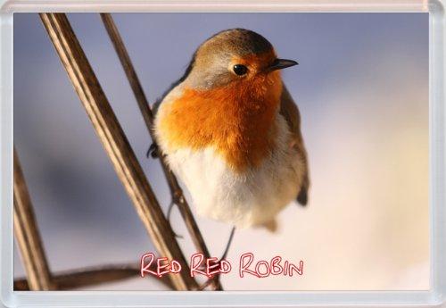 red-red-robin-jumbo-fridge-magnet