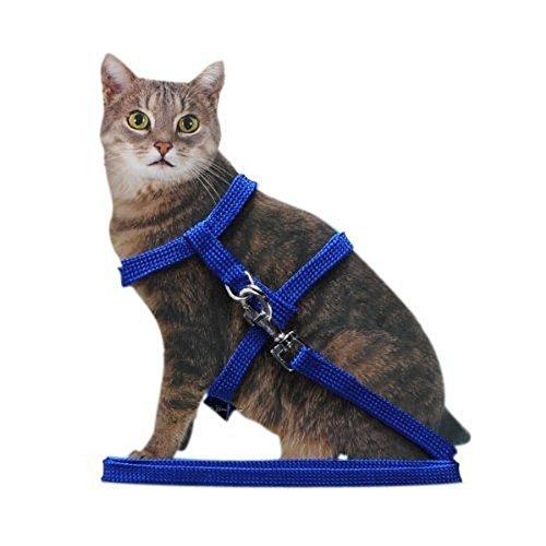 Imaginar un gato con una correa puede hacerte sonreír, de hecho, estamos acostumbrados a pensar que la correa es para perros. Pero con el collar Silvestro podrás dar paseos y visitar al veterinario con tu querida mascota, cada vez que sea necesario.