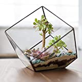 MyGift Modern Artistic Clear Glass Cube Box Glass Plant Terrarium/Decorative Votive Candle Tea Light Holder