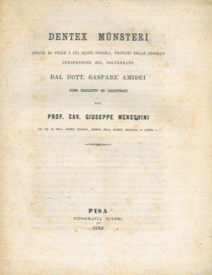 Dentex mŸnsteri specie di pesce i cui resti fossili, trovati nelle argille subapennine del volterrano dal dott. Gaspare Amidei sono descritti ed illustrati dal prof. cav. G.M.