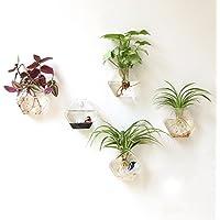 Mkouo 2 unidades Soporte de pared transparente colgante contenedor de maceta de flores de jarrón de cristal Planter Terrario Decoración del hogar -- hexagonal Forma