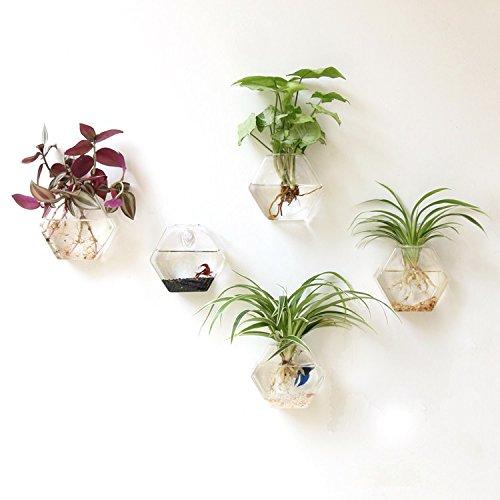 Mkouo 2 Stück Glas zum Aufhängen Wand Vase Flower Pflanztopf Behälter Wasser Pflanzkübel Home Office Dekoration, 6,5 zoll – Sechseck