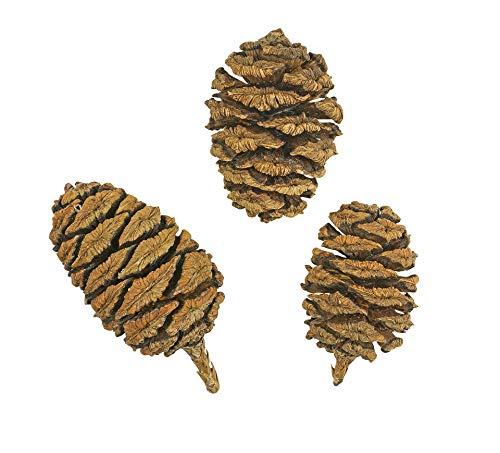 150 Samen Riesen-Mammutbaum -Sequoiadendron giganteum- ★ ★ ★ DER GIGANT UNTER DEN BÄUMEN ★ ★ ★