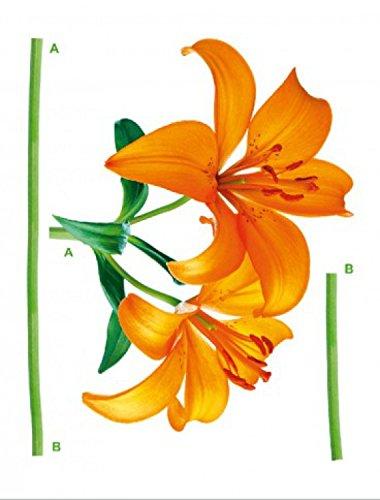 flores-orange-lily-pegatina-para-pared-85-x-65cm