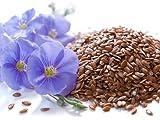 5 Liter ProFair® Leinöl, kaltgepresst, 100% aus reiner Leinsaat – VERSANDKOSTENFREI! - 3