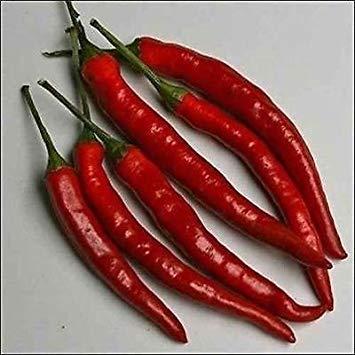 Pfeffer Cayenne Langen roten Gemüsesamen (Capsicum Annuum) 200 + Seeds -