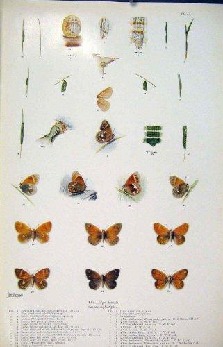 impresion-antigua-de-la-bella-arte-de-la-larva-de-la-mariposa-del-gusano-de-los-insectos
