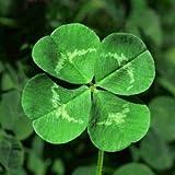 Lucky 200pcs trébol de cuatro hojas de hierba Semillas Decoración crecer su interés suerte Campo semillas de flores DIY propi