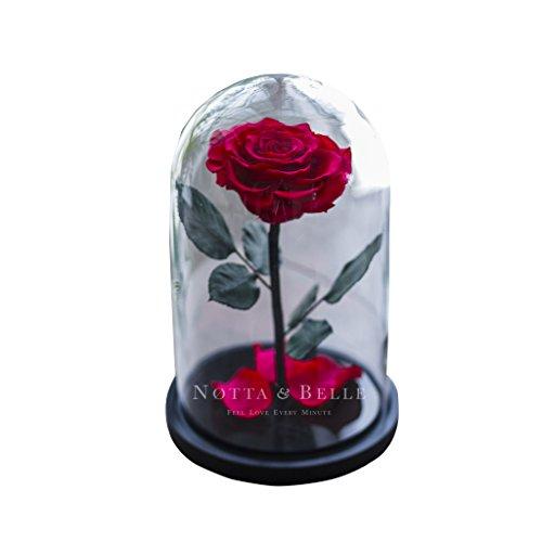 Beauty and The Beast C'est Une Rose éternelle Fuchsia sous Cloche en Verre