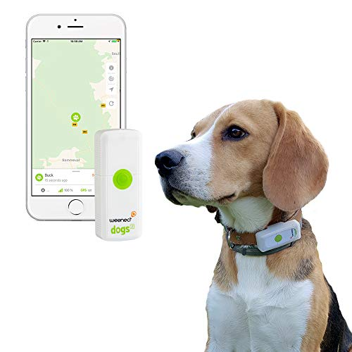 Weenect Dogs 2 - Traceur GPS pour chien