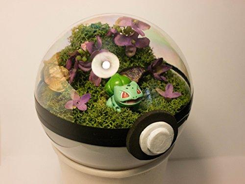 sfera-poke-terrarium