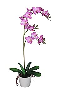 Botanic Haus 537190 VH - Orchidea Phalaenopsis