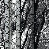 Klebefolie d-c-fix WOOD Wald Holz Birken Baum Dekor 45 x 200