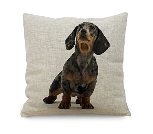yinggouen-dog-looking-in-cielo-decorate-per-un-divano-federa-cuscino-45-x-45-cm